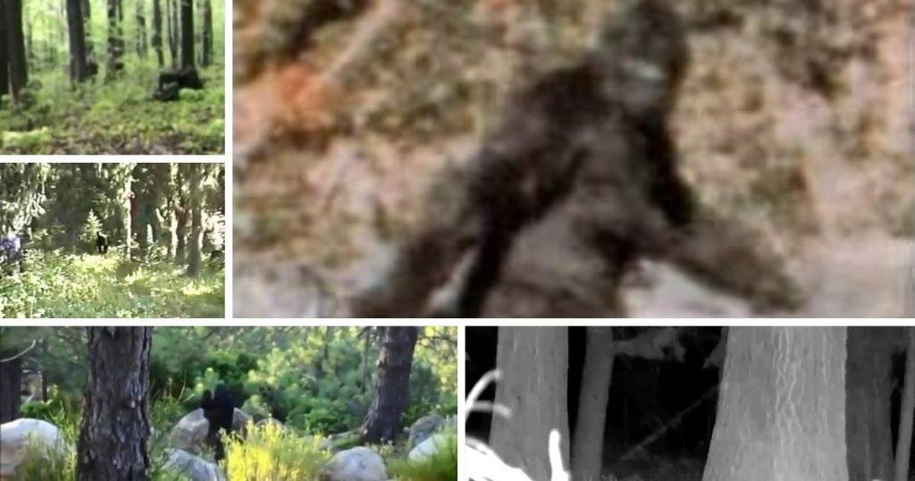 top 5 best bigfoot videos