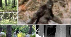 best-bigfoot-videos